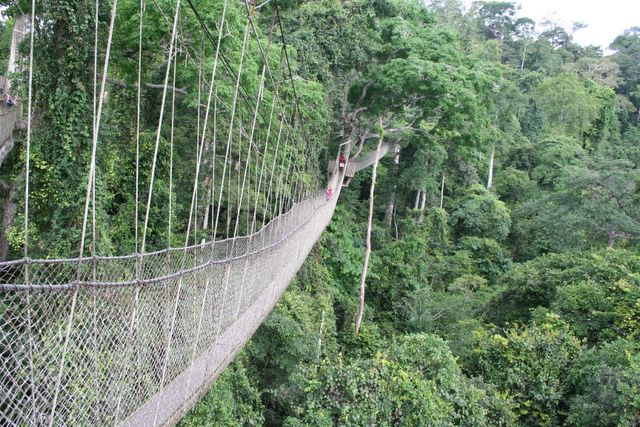 kakum national park canopy walk Ghana